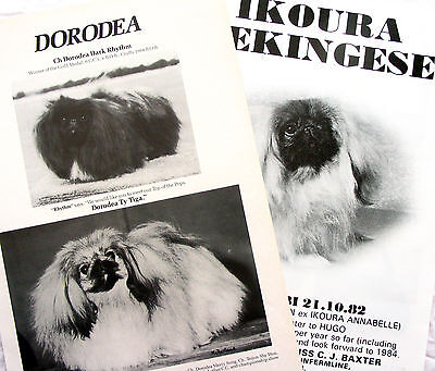 PEKINGESE TOY DOG BREED KENNEL CLIPPINGS x 40 1980s