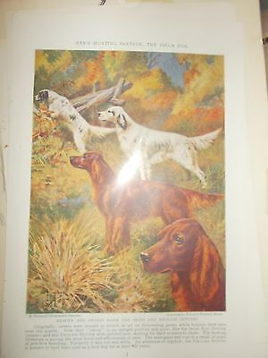 EH Miner English & Irish Setter bookplate Print 1937 National Geographic Mag