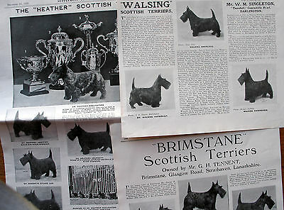 SCOTTISH TERRIER SCOTTIE DOG BREED KENNEL CLIPPINGS  1930s -1940s x 40