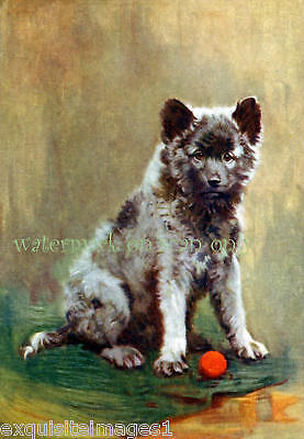 Antique Art~The Keeshond Dog~Puppy~NEW Lge Note Cards