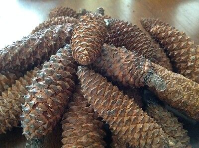 Closed pine cones 17make your own Christmas decorations - real pine cones