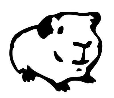 Guinea Pig Car Vinyl Decal/sticker!