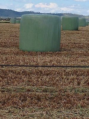 silage Oats,Peas & Vetch