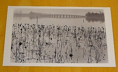 Magnum Photo Postcard ~ Dead Lotus Leaves, Summer Palace, Beijing, China 1964