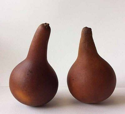 A Natural Dried Gourds with Full Seeds for Crafts Painted and New Year Gift