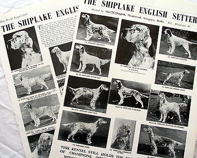ENGLISH SETTER DOG BREED KENNEL CLIPPINGS  1930s - 1950s x 30