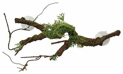 Sucker Mounted Cane Terrarium Vivarium Ornament Decoration