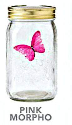 NEW - My Butterfly Collection - Animated Butterfly in a Jar - Pink Morpho