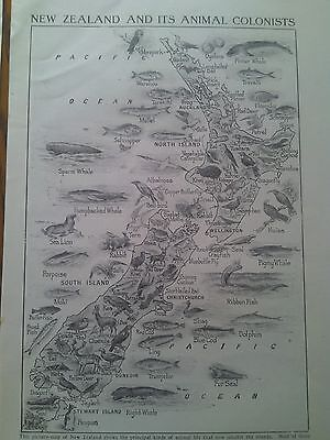 1924 Map of Animal Colonists of New Zealand  1 Page Ideal to Frame