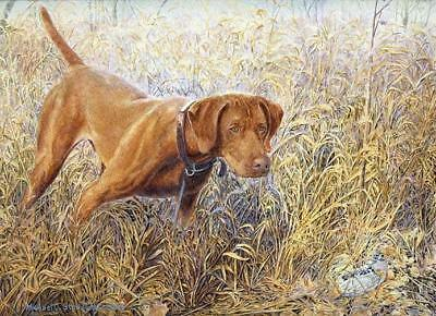 Right There Vizsla Limited Edition Print