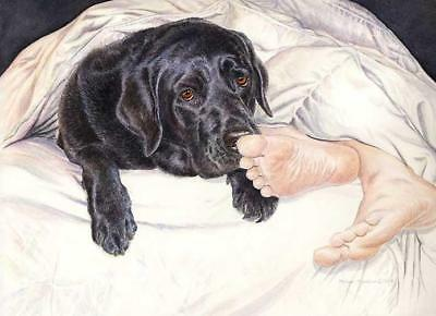 """Lab Feet"" A Limited Edition Labrador Retriever Print"