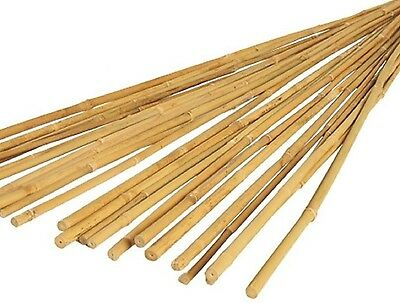 Bamboo Canes 1.5m/ 150cm/ 5ft, 12-14mm Thick Garden Plant support poles, 50pack