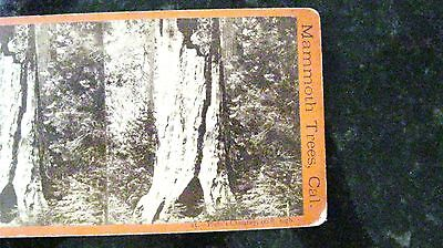 Stereoview, Mammoth Trees Cal. Pluto's Chimney. E & H T Anthony American Views