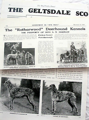 DEERHOUND DOG BREED KENNEL CLIPPINGS 1930s - 2000s x 30