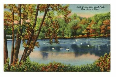 DUCK POND, EDGEWOOD PARK, NEW HAVEN, CT - pm 1948