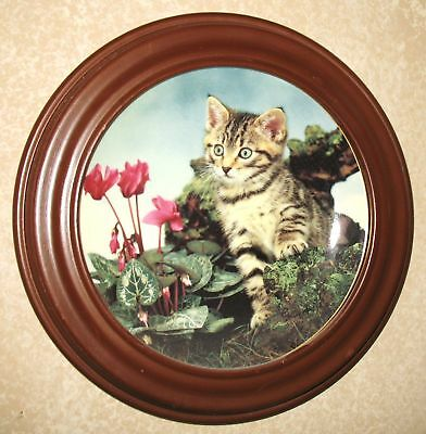 Collectable Catplate Princeton Gallery Pure Personality