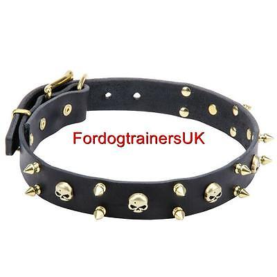 Pirate Dog Collar Designs with Brass Skulls | Spiked Leather Dog Collar NEW! C58