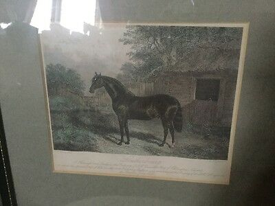 Antique Framed Victorian Horse Racing Print Depicting The Racehorse Loutherbourg