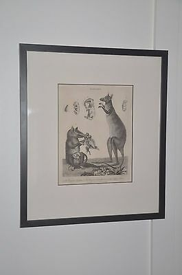 Framed Antique Scientific Zoological Print Kangaroo dated 1803 - reduced!