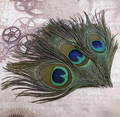 Pack of 10 Natural Peacock Feather Tail Eye Millinery, Jewellery Making feathers