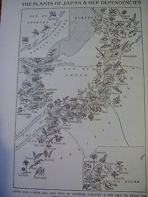 1924 Map Plant Life Japan & Korea Small Page to Frame?