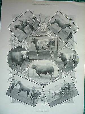 At The Leicester Agricultural Show, 1895.