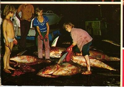 MADEIRA TUNA FISHING LITTLE BOY IN UNDERWEAR 1960S POSTCARD (see all 3 images)
