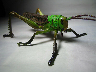 4D Insect Puzzle Toy / Figure GRASSHOPPER