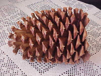 "Pine Cone Large 6"" Tall 4"" across Crafting Pinecone Decor Decoration Centerpiece"