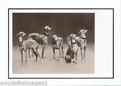 Vintage Photo~ Five Cute Italian Greyhound Dogs~ NEW Large Note Cards