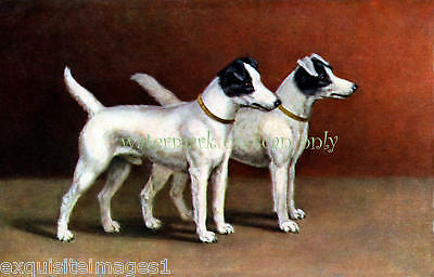 Antique Art~Two Fox Terrier Dogs~NEW Lge Note Cards