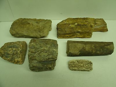 Lot of PETRIFIED Wood rough rock fossils lapidary stone (B)