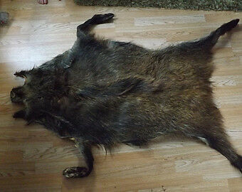 Wild Boar Fur skin - Drum skin crafts pagan shaman medicine bags clothes