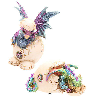 Hatching Baby Dragon Figurine Statue Indoor Ornament Home Room Decor Cute Gift
