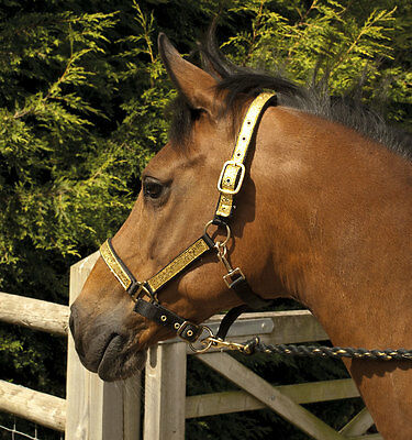 Rhinegold Silveror Gold Head Collar And Lead Rope Set Sparkle Bling Glitter Set