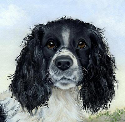Dogs Springer Spaniel Fine Art Limited Edition Giclee Print /Painting S.Barratt