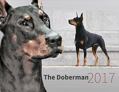 Beautiful 2017 Doberman wall calendar by Leslie Hall