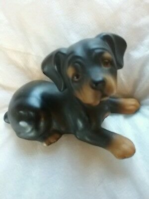 Pot Rottweiler Dog