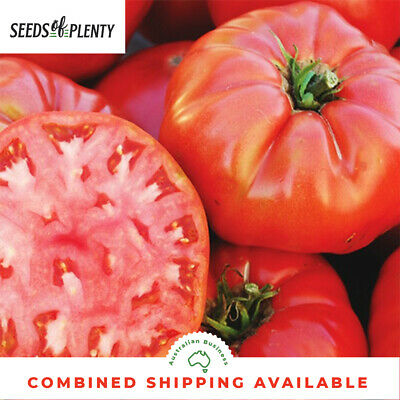 TOMATO - Mortgage Lifter (80 Seeds) ENORMOUS FRUITS Heirloom