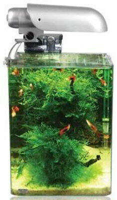 Cocoon Nano Aquarium Solar Set 1 (10 l - 20x20x25 cm) von Aquatic Nature
