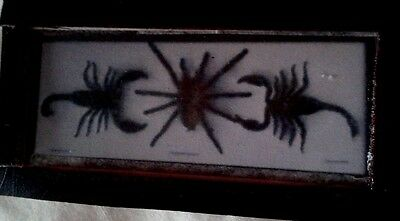 Dolls House  Bug collections (A Taranula & Scorpians) picture