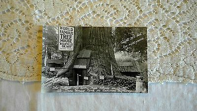 WORLD FAMOUS TREEHOUSE - REDWOOD HIGHWAY - Real Photo Postcard - VINTAGE