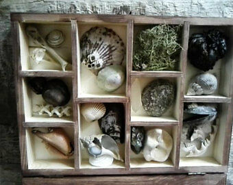 Curios Of Nature - Curiosity collection beach pagan shaman druid witchcraft