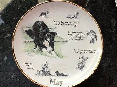 The Border Collie Year Plate - May - Collectable Danbury Mint Plate