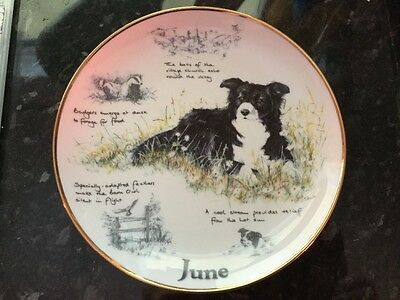 The Border Collie Year Plate - June - Collectable Danbury Mint Plate