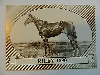 Horse Racing Star Card~RILEY 1890 Kentucky Derby Winner~NEW MINT Thoroughbred
