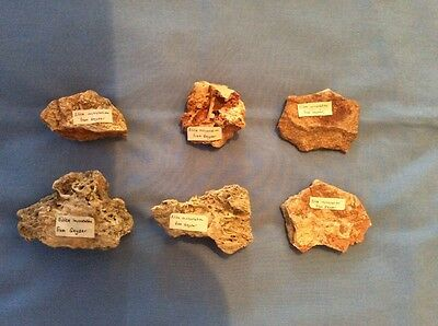 Vintage Set Of 6 Silica Incrustation From Geysers In Iceland