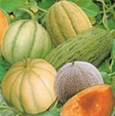 Heirloom heritage Melon seeds 20 different varieties Certified organic farmer