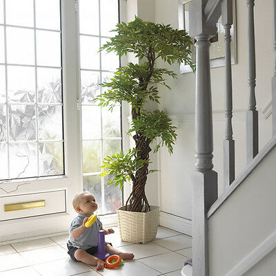 Japanese Fruticosa Artificial Trees & Plants   6ft Artifical Tree   Topiary Tree