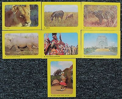 "1965  Sanitarium Breakfast Cards - ""AFRICAN  SAFARI""  x 7"